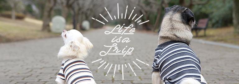 Life is a trip(ライフイズアトリップ)